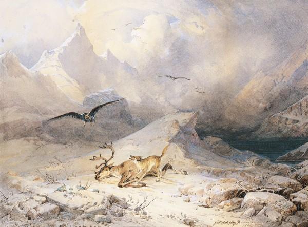 """Franz Schiertz (1813-1887) """"Ulv og ørn som kjemper om en død reinbukk"""", ca 1849"""