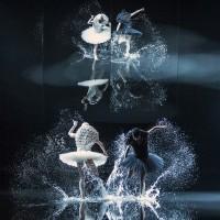 A Swan Lake with The Norwegian Nationalballett; Koreografi: Alexander Edman. The white swan Camilla Spidsøe, the black swan Melissa Hough.